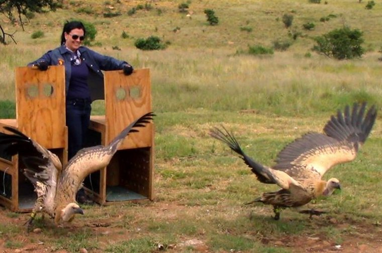 vulture release